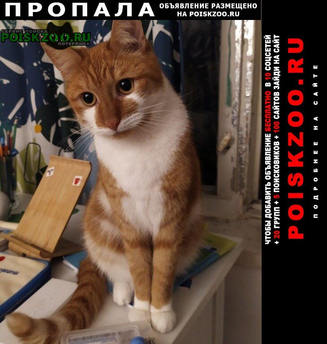 Москва Пропал кот в измайловском парке