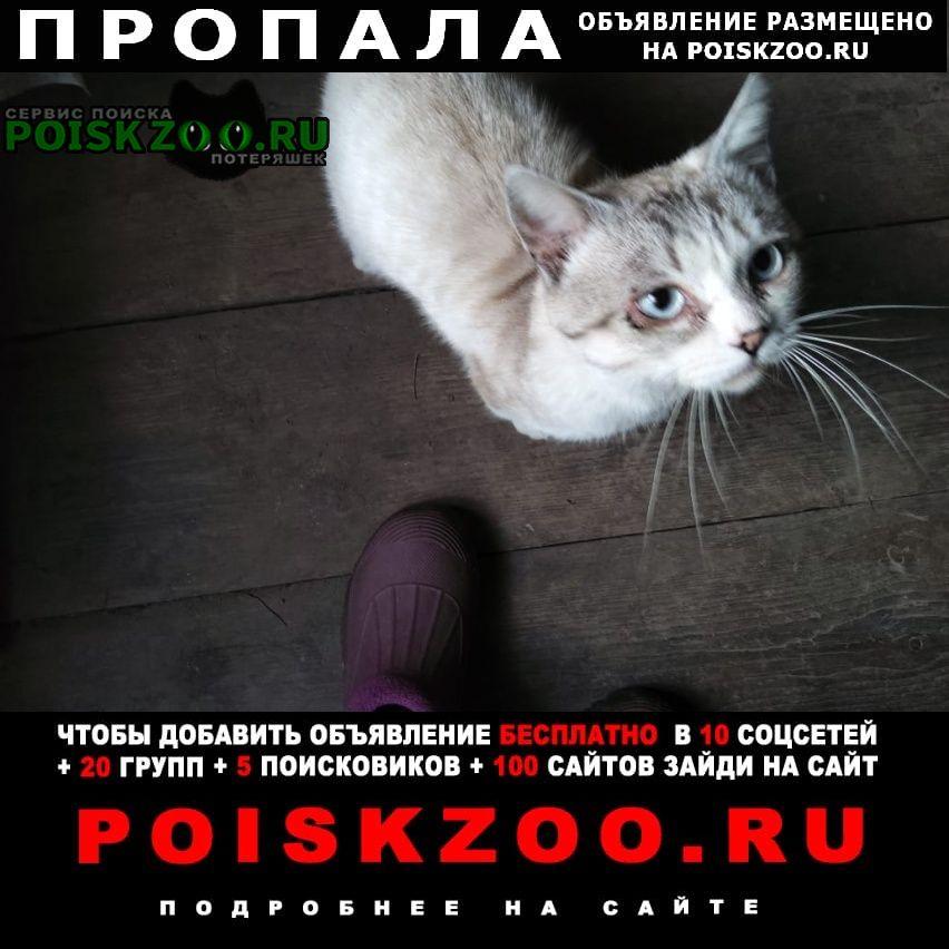 Пропала кошка кот Ковров