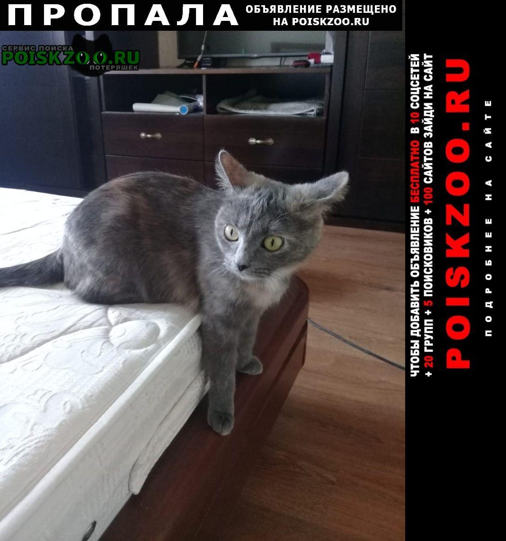 Электрогорск Пропала кошка