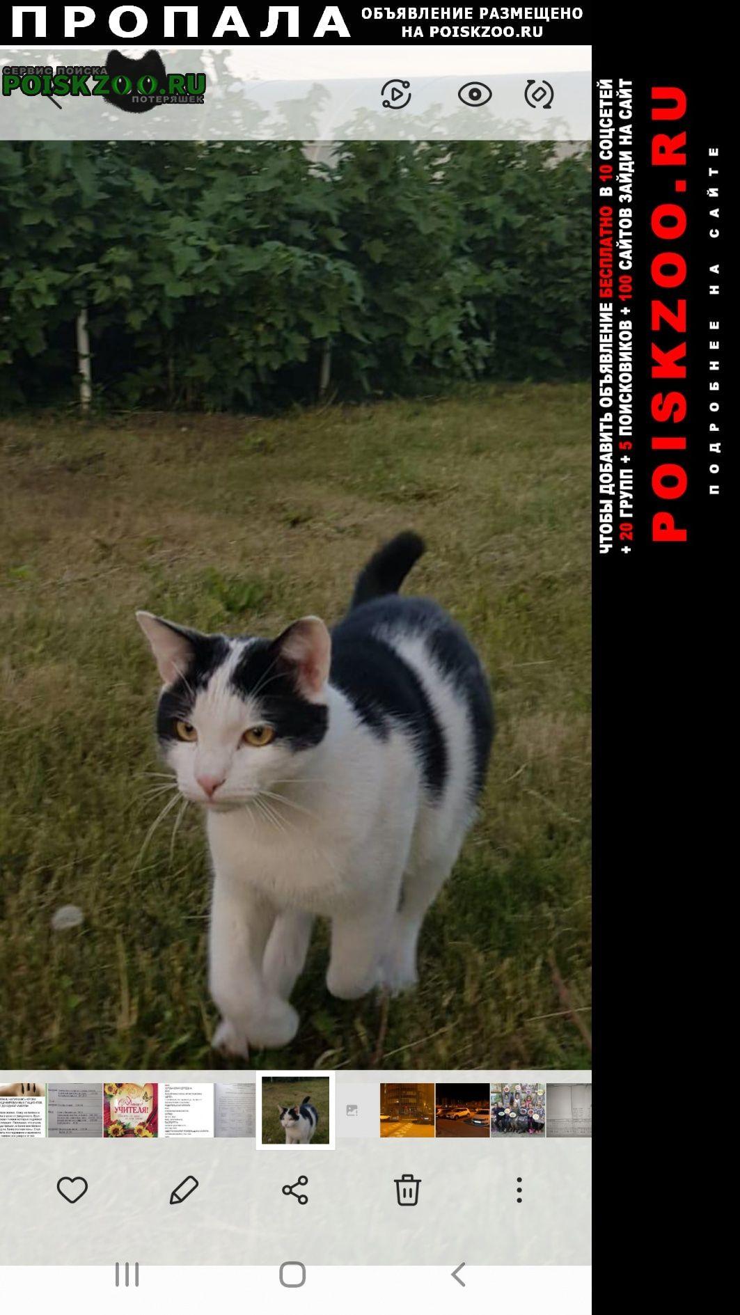 Саранск Пропал кот