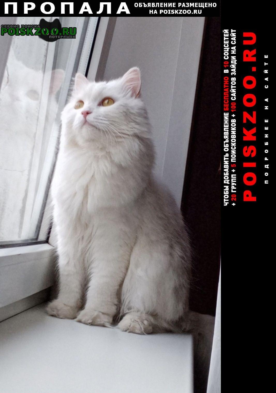 Пропал кот Серпухов