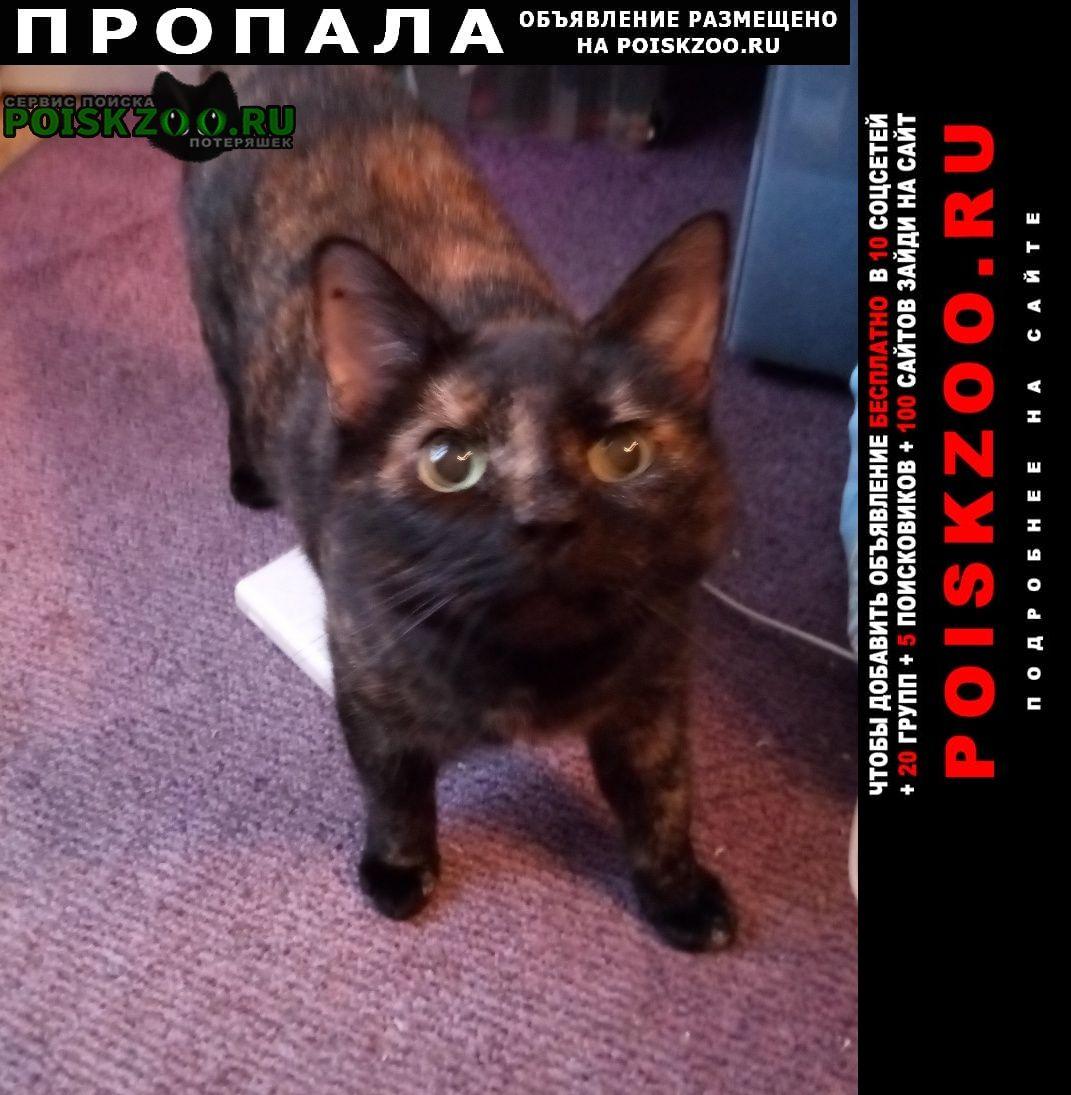 Пропала кошка в марьино Москва