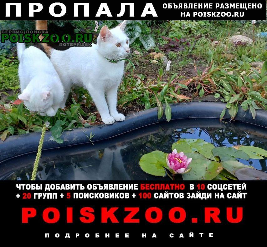 Пропал кот Яхрома