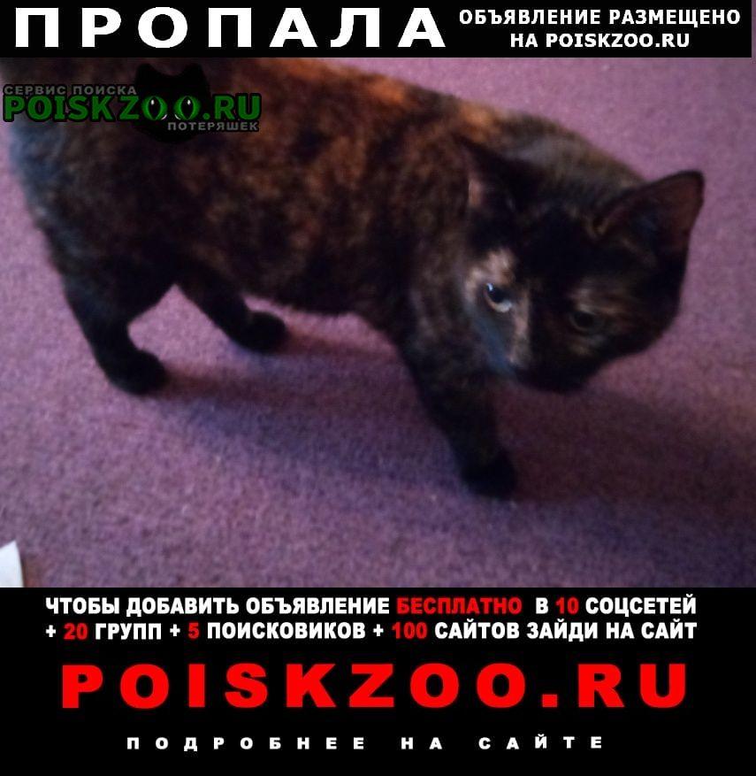 Пропала кошка черно-коричневая, хромает, вознаграждение Москва