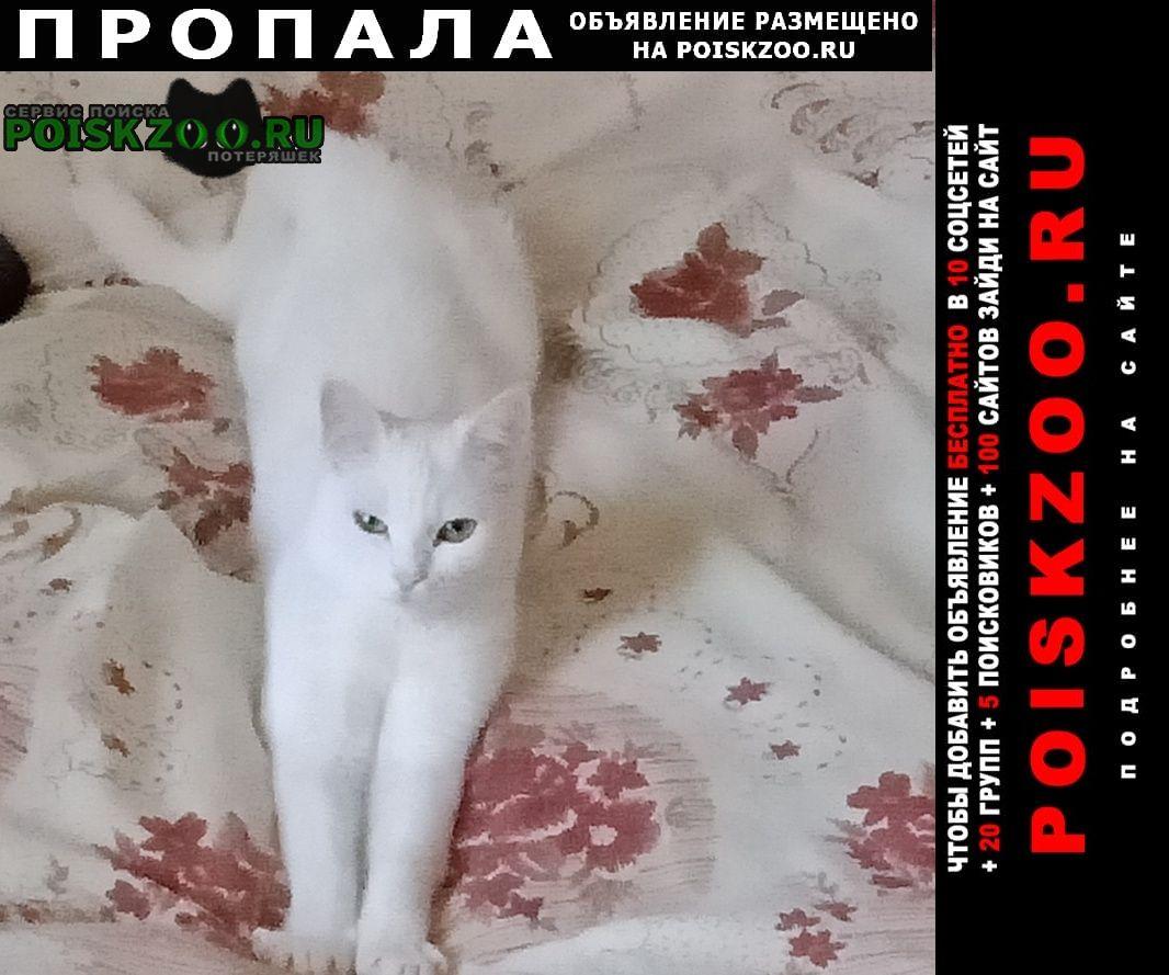 Нижний Тагил Пропала кошка белая