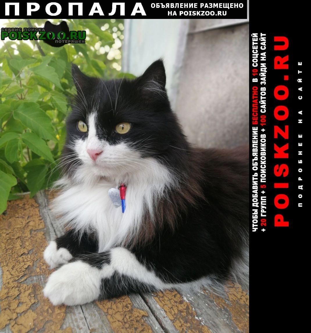 Ульяновск Пропал кот прошу, верните а