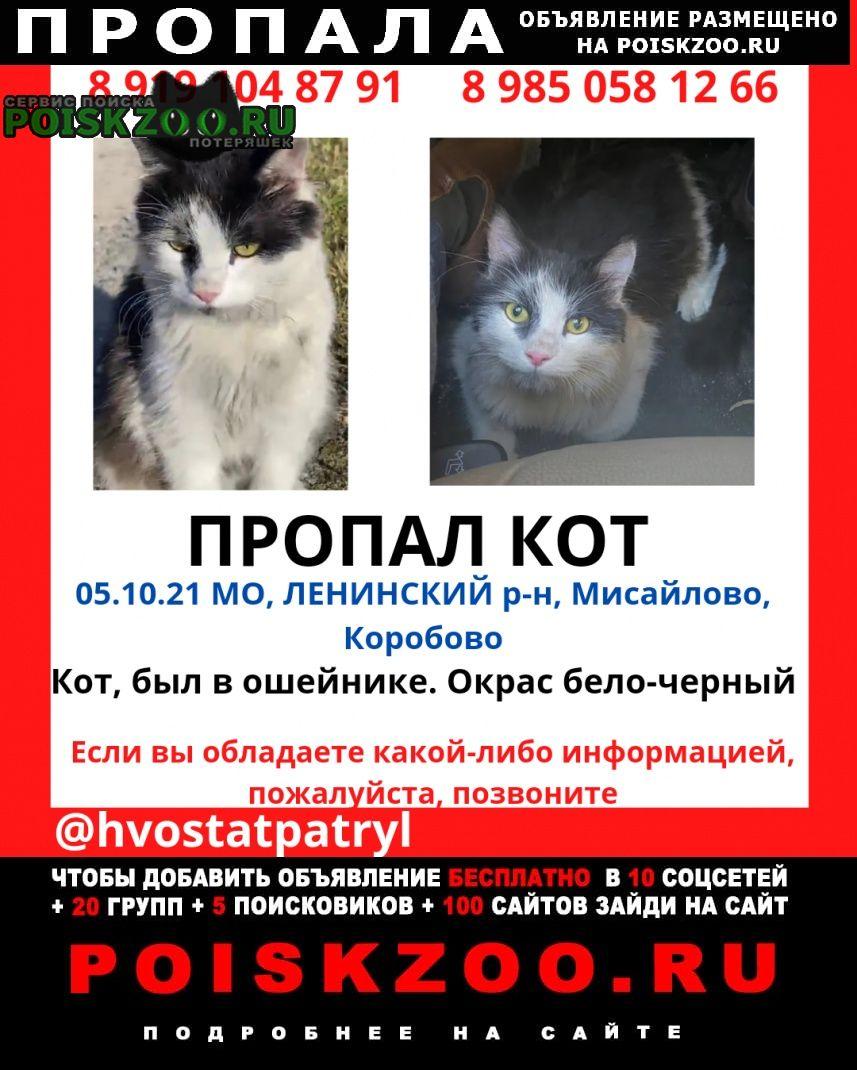 Пропал кот в подмосковье Москва