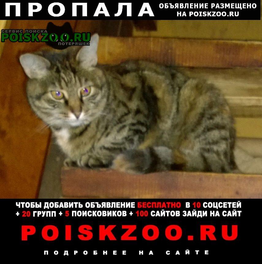 Москва Пропала кошка новая, снт компьютер