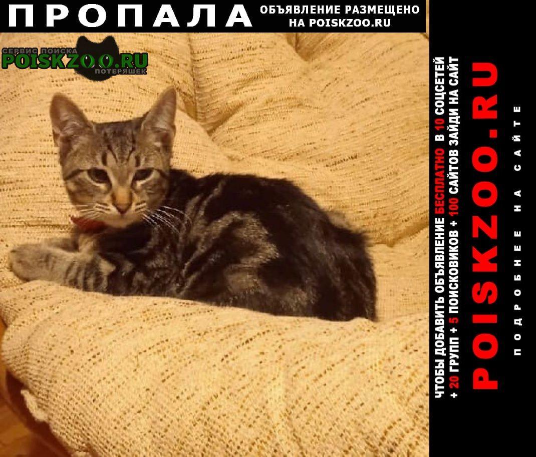 Ярославль Пропал кот перекоп - ёнок