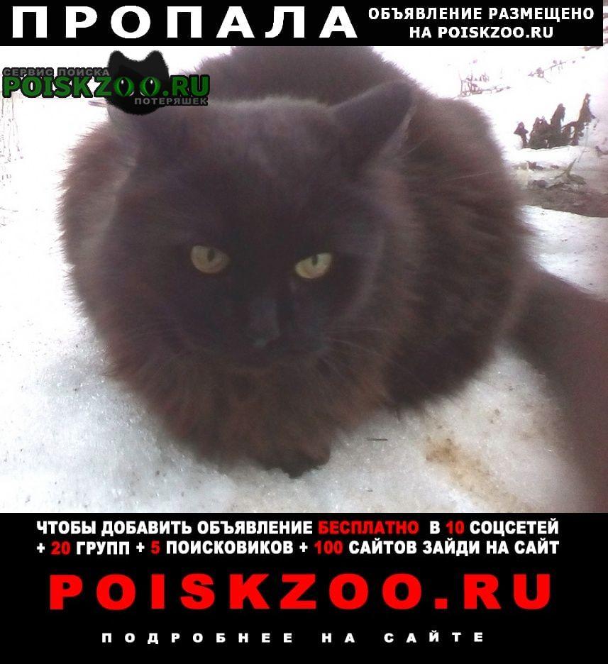 Иваново Пропал кот ул.луговая, д.афанасово