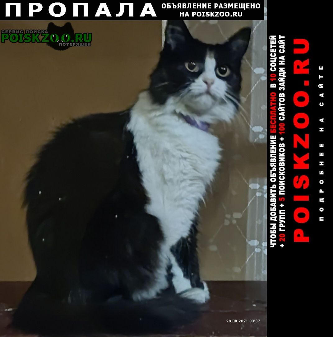 Алушта Пропала кошка