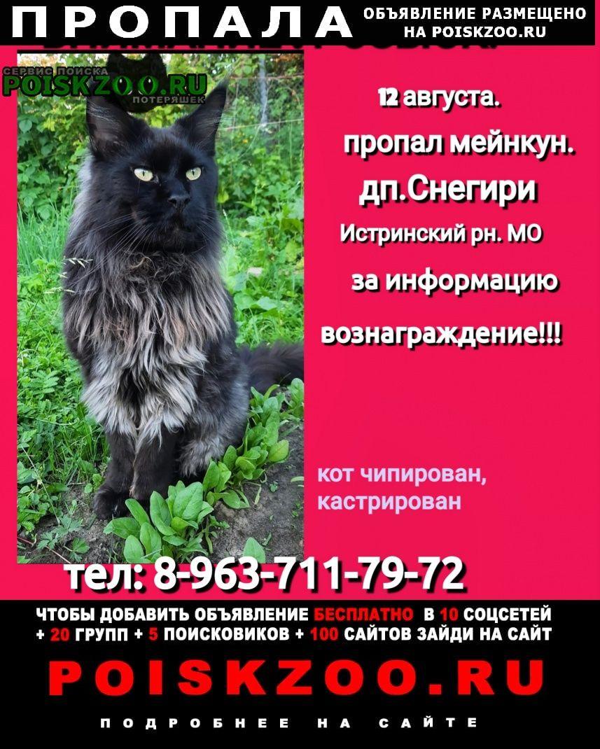 Пропал кот мейнкун снегири мо Дедовск