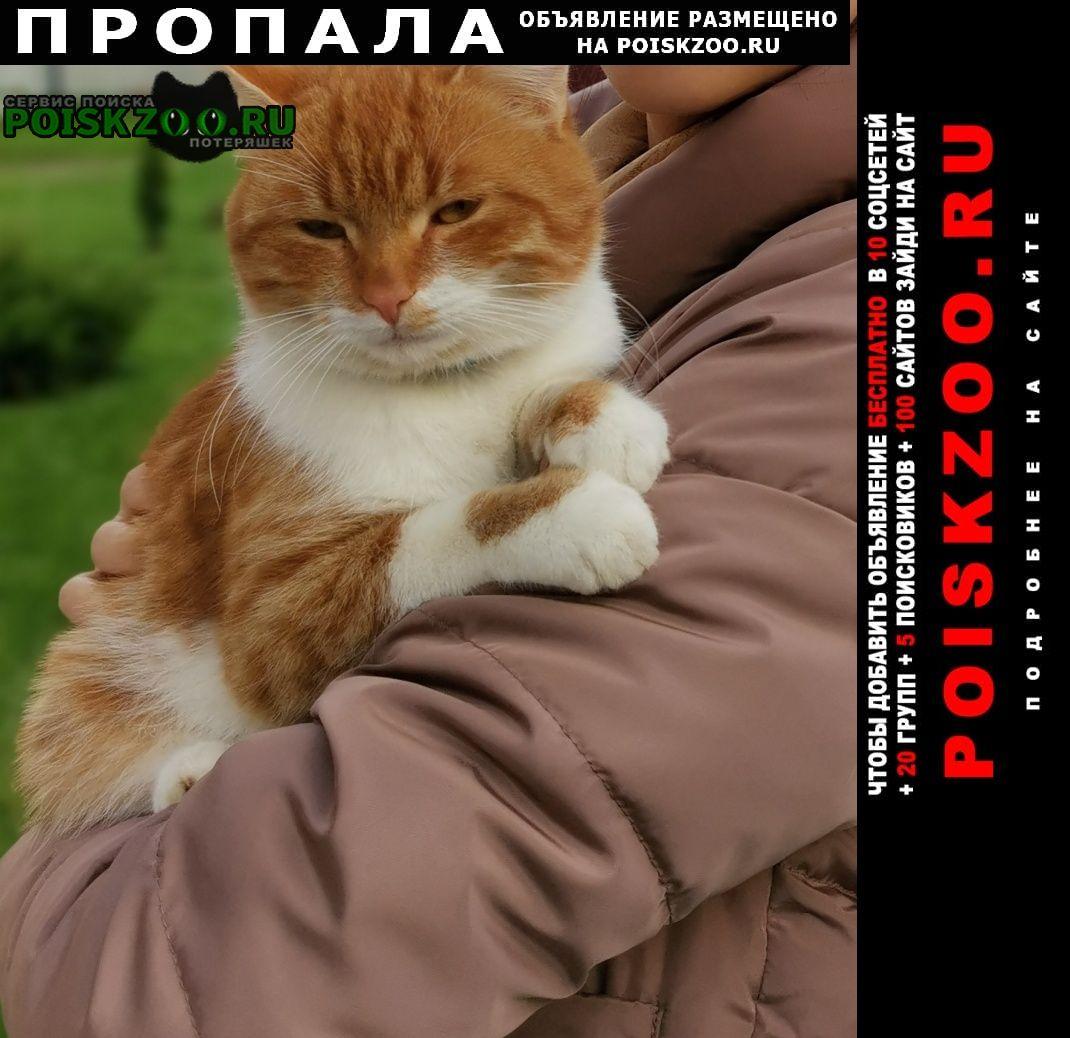 Пропал кот Павловский Посад