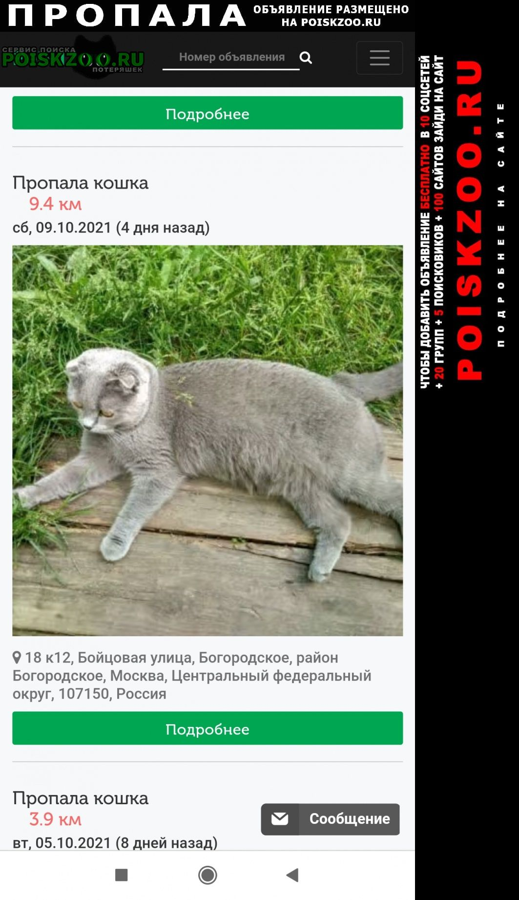 Москва Пропала кошка.г. британка