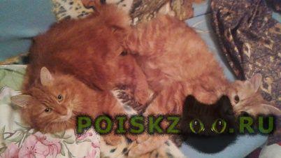 Пропала кошка две кошки. г.Москва