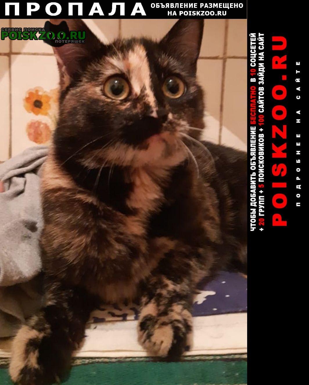 Пропала кошка в районе метро парк культуры. Москва