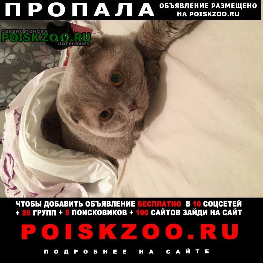 Щелково Пропал кот британец, серый, вислоухий.
