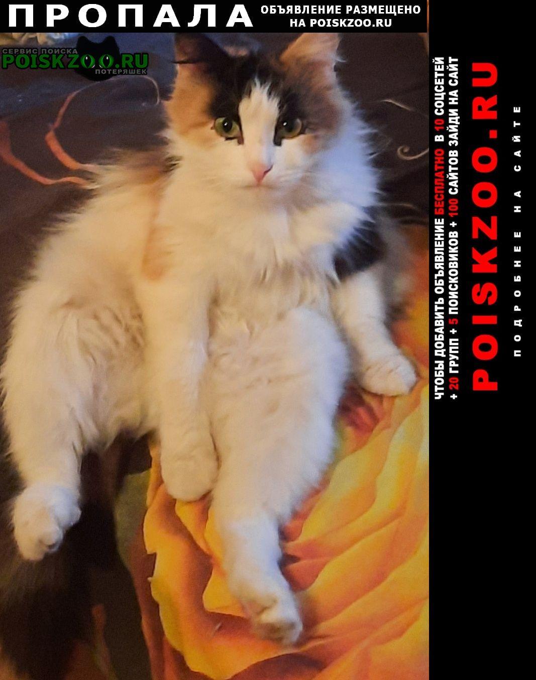 Пропала кошка зовут василиса Владимир