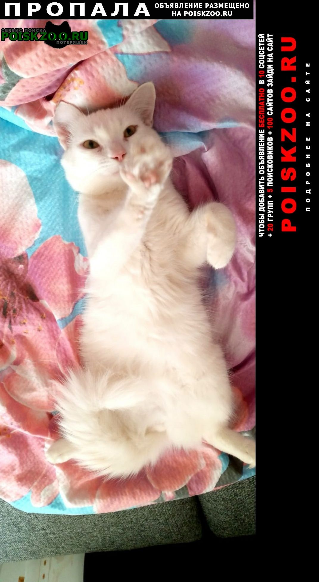 Воронеж Пропал кот белый, турецкая ангорка