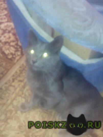 Пропала кошка кот г.Саратов