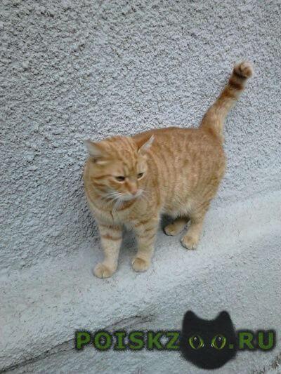 Пропал кот рыжий в желтом ошейнике г.Краснодар