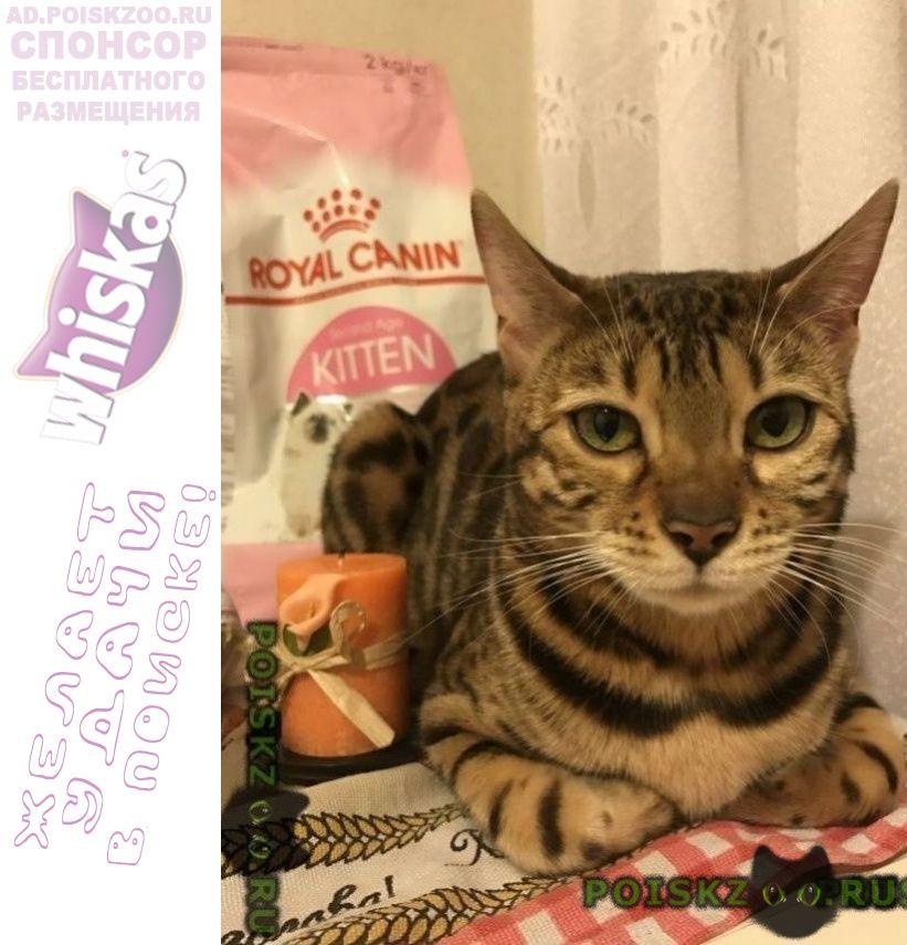 Пропала кошка метро молодёжная г.Москва