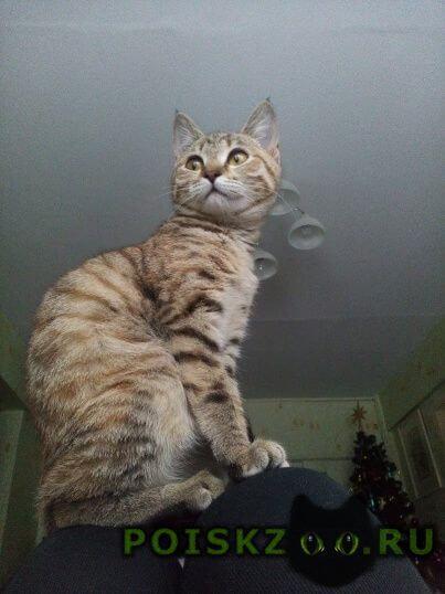 Пропала кошка энгельса 38 г.Калуга