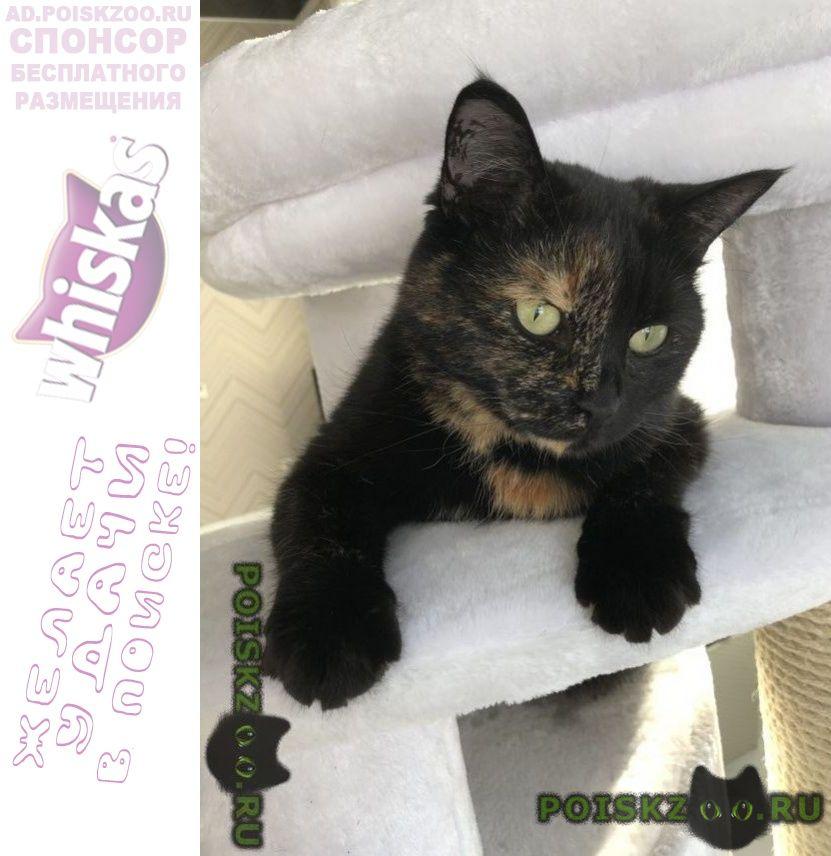 Пропала кошка д никульское, мытищинский райое г.Пироговский
