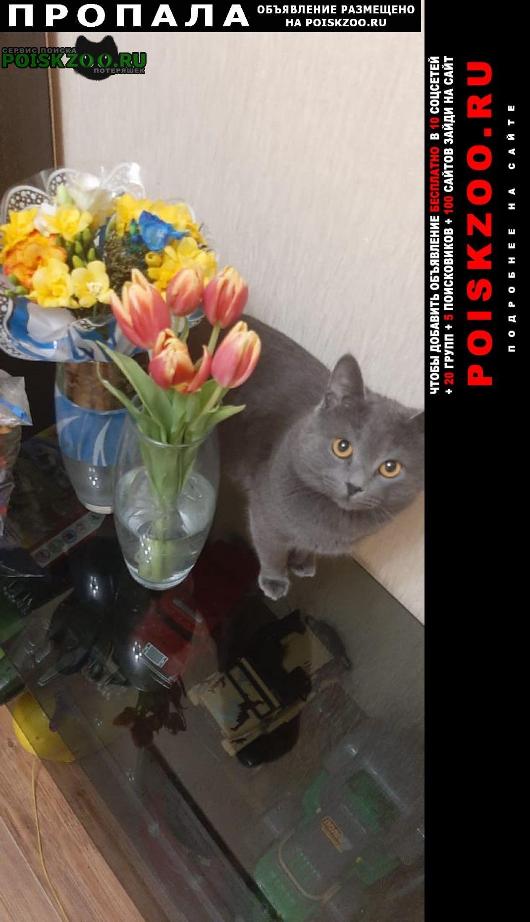 Динская Пропала кошка