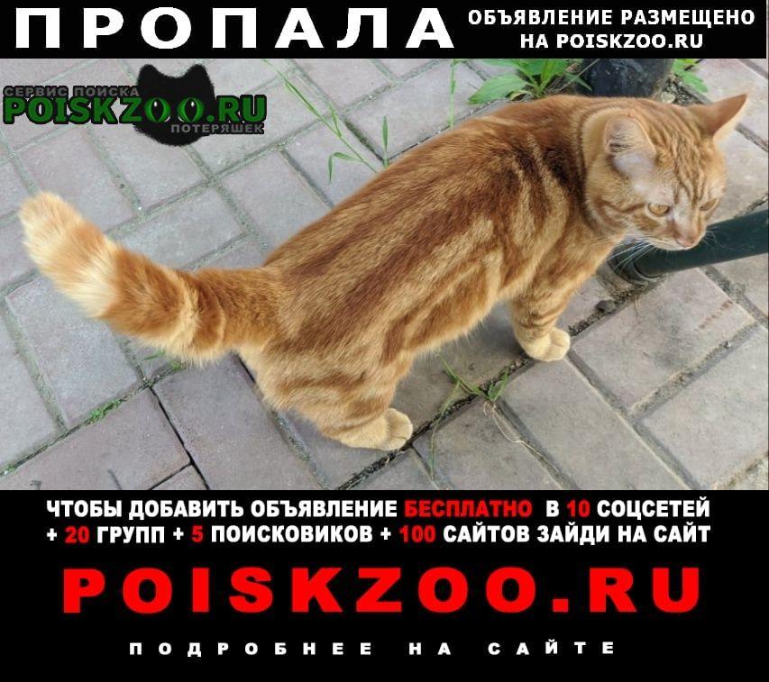Пропал кот, аксай - большой лог г.Аксай (Ростовская обл.)