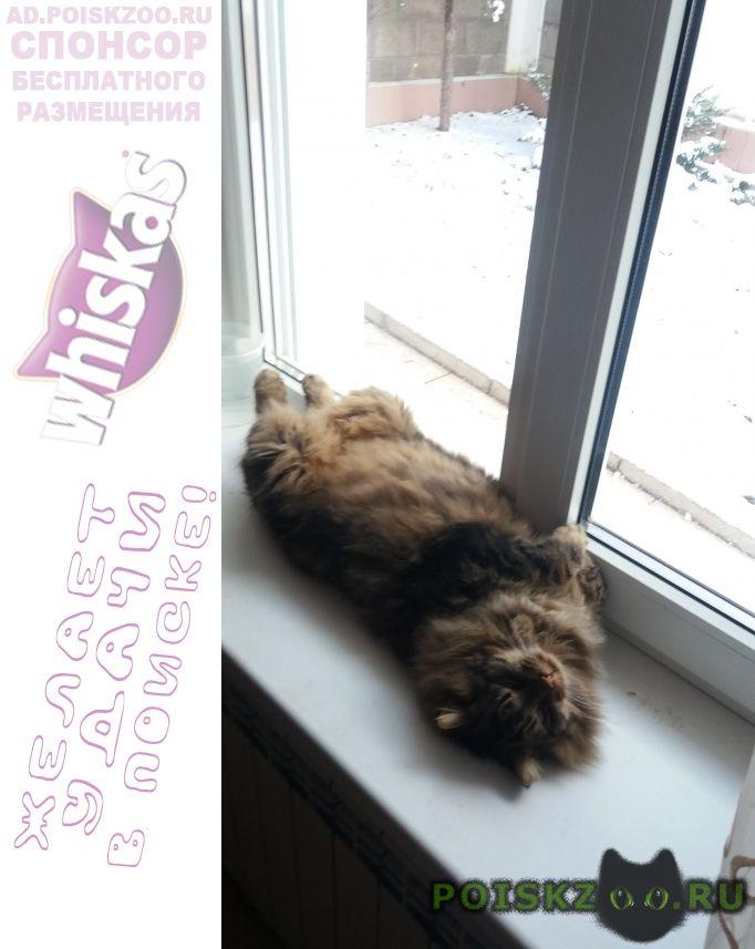 Пропал кот +---- ирина г.Севастополь