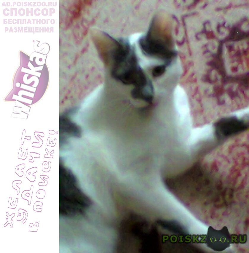 Пропала кошка г. г.Тюмень