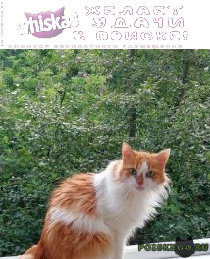 Пропала кошка нагорный район г.Москва