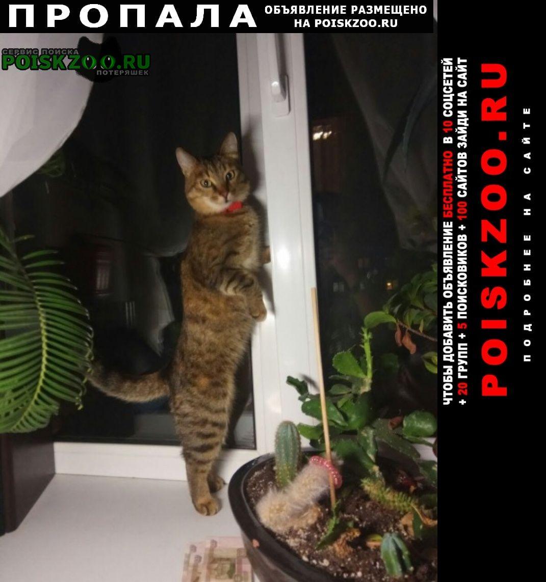 Пропала кошка плюша Самара
