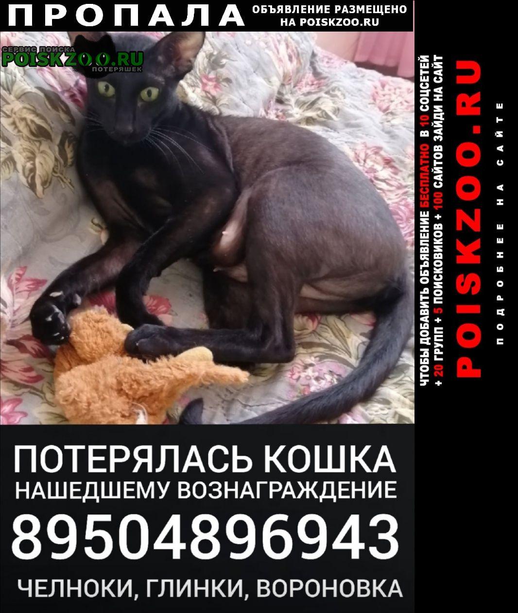 Пропала кошка вонаграждение 30 тыс руб Курган