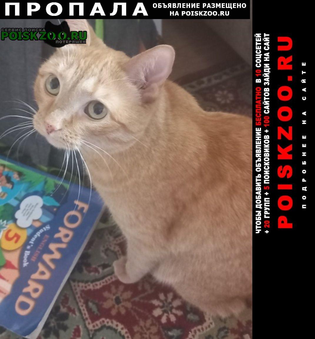 Пропала кошка г. Рязань