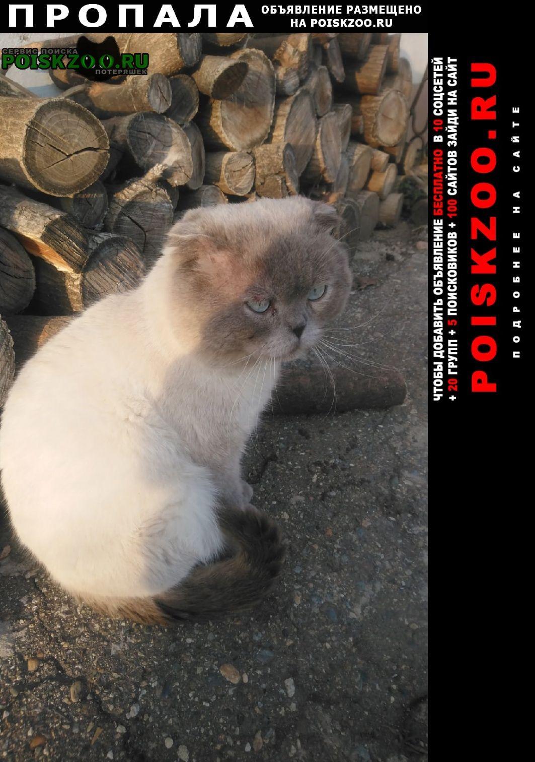 Майкоп (Адыгея) Пропал кот