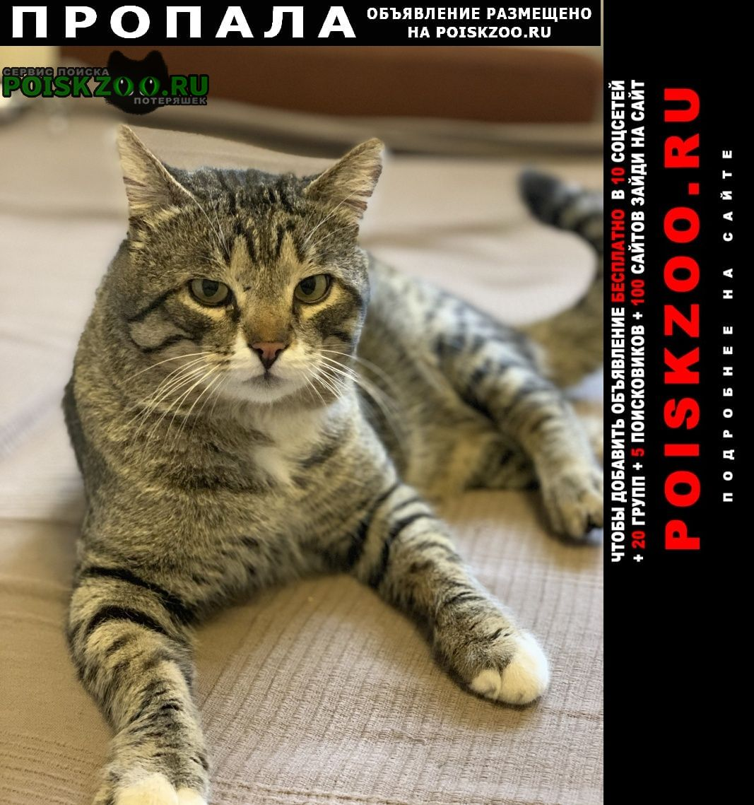 Пропал кот вознаграждение 20000 Ростов-на-Дону