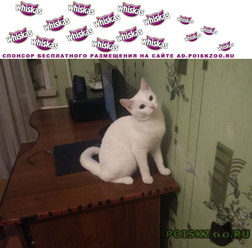 Пропала кошка любимец семьи г.Караганда