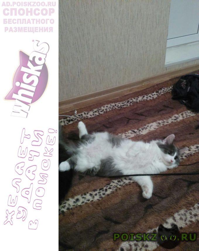 Пропал кот г.Солнечногорск