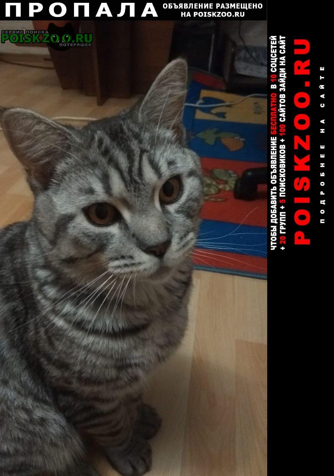Пропала кошка кот серый, полосатый, 1.5 года Истра