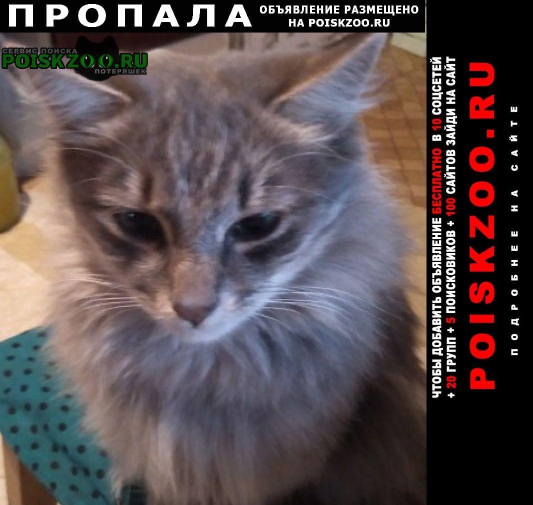 Пропал кот Ставрополь