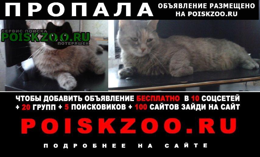 Пропала кошка Йошкар-Ола