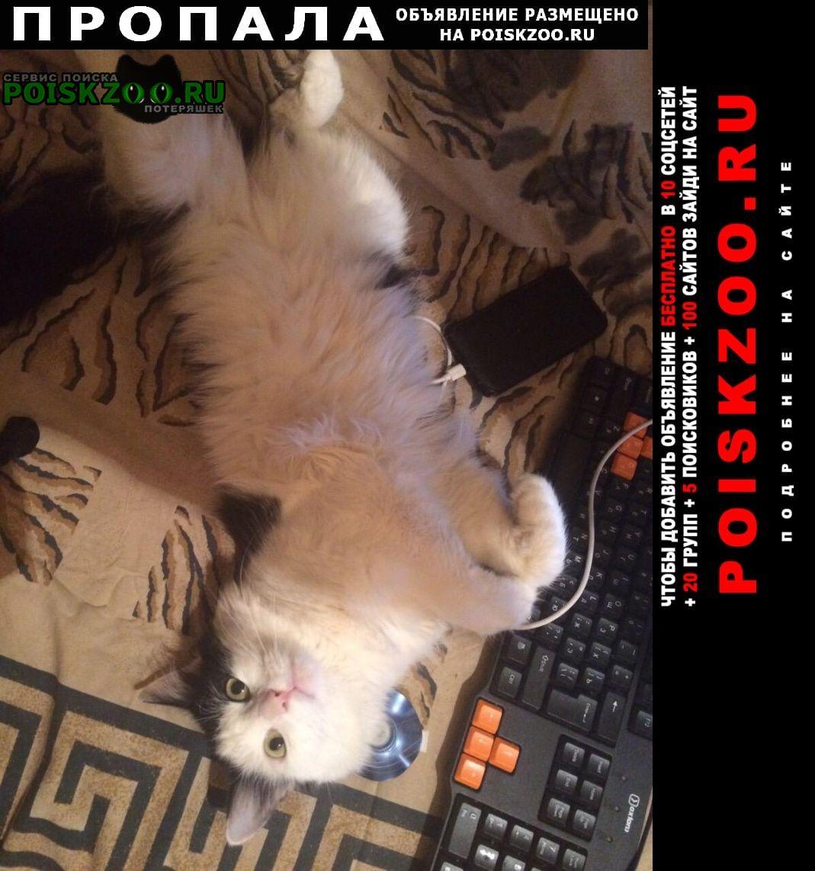 Пропала кошка был с ошейником фиолетового цвета Воронеж