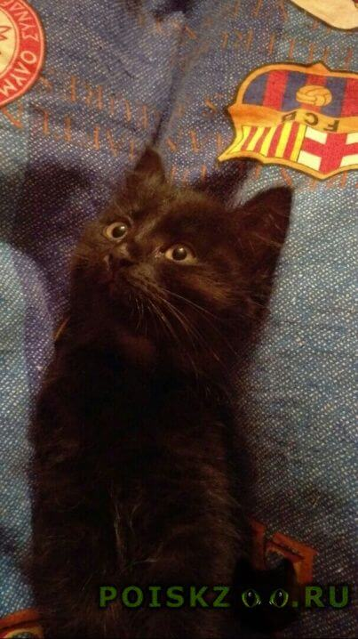 Пропала кошка котенок г.Москва