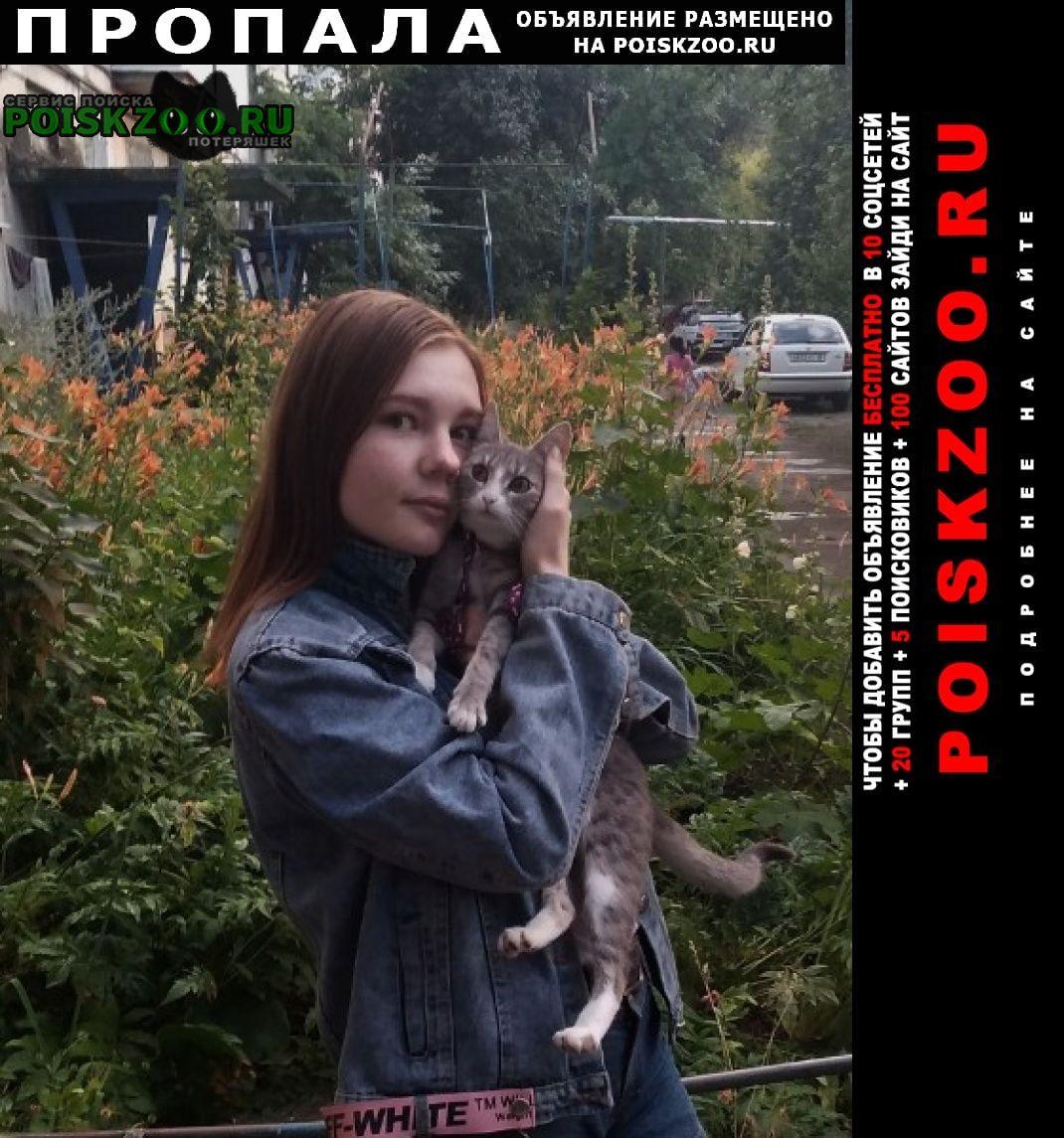 Луганск Пропала кошка, внимание