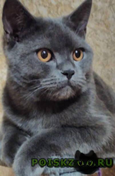 Пропал кот г.Кстово