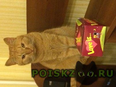 Пропал кот в районе ул.б.васильева куйбышева г.Тамбов
