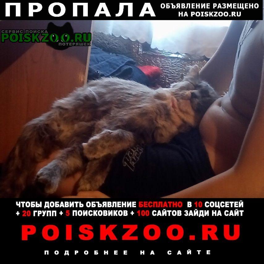 Пропал кот улица 22 апреля 53 Омск