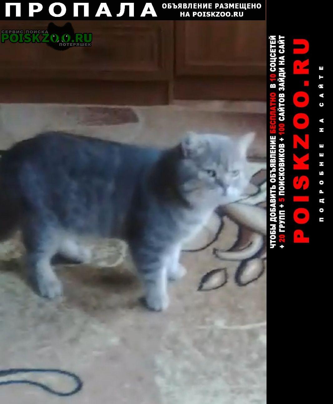 Пропал кот Кузнецк